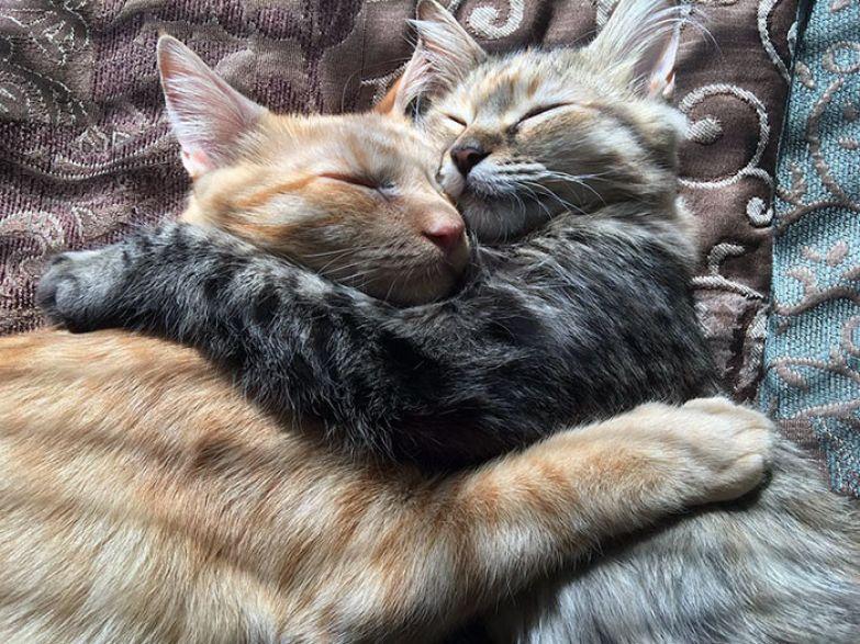"""""""Они неразлучны с того момента, как их забрали домой, буквально все делают вместе"""", - рассказывает Джеймс, хозяин питомцев. Любовь, животные, кот"""