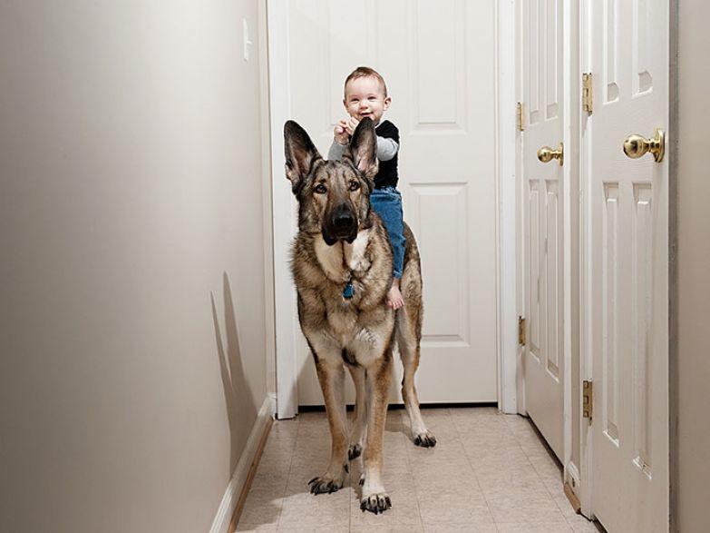 Крупные собаки и дети 9
