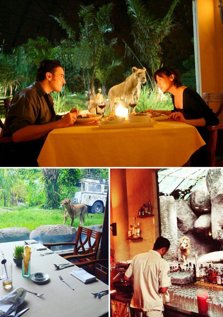 Ужин в компании львов, Tsavo Lion Restaurant, Бали, Индонезия мир, подборка, ресторан