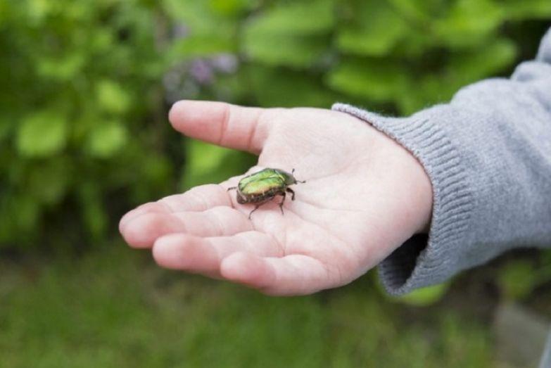 Игра: Кто больше насобирает майских жуков?