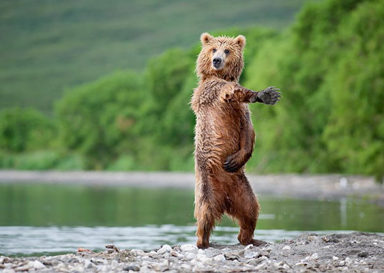 Медведи 2