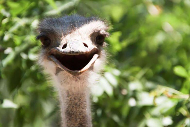 77. животное, улыбка