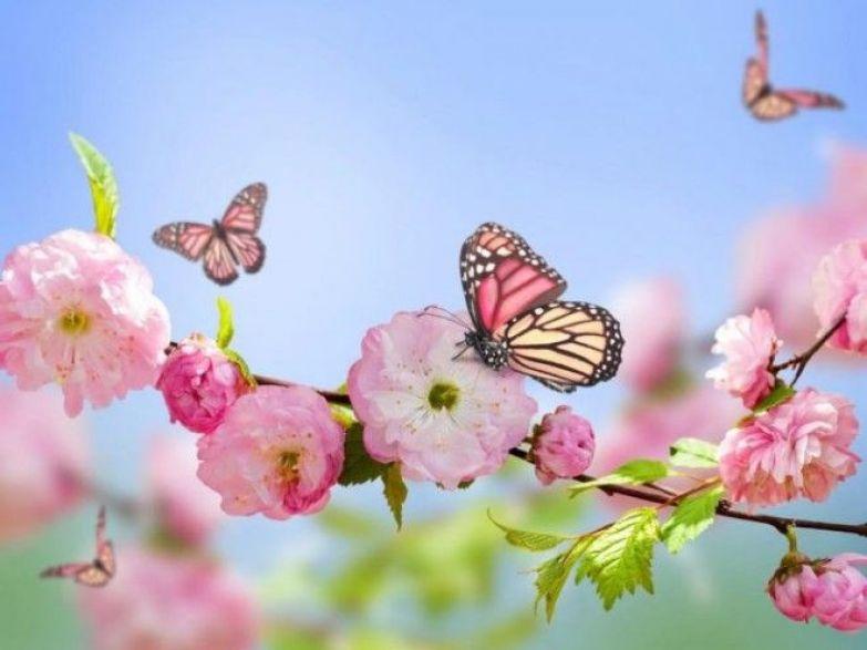 Выберите бабочку месяца своего рождения и узнайте о себе чуточку больше