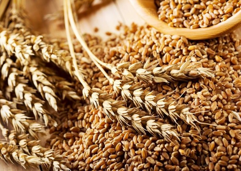 урожай зерновых
