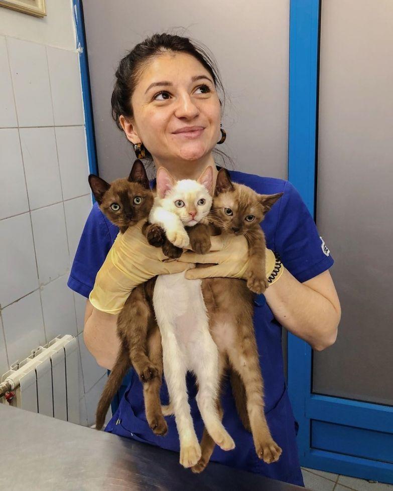 Ветеринар поделилась историями и советами из практики, которые важно знать всем