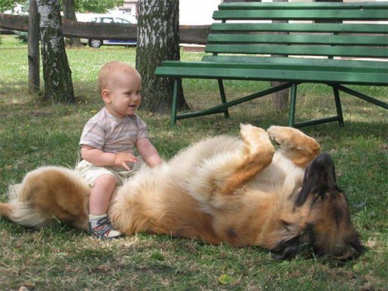 Крупные собаки и дети 1