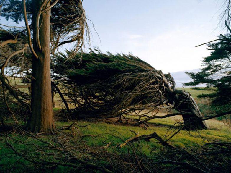 Ветряные деревья