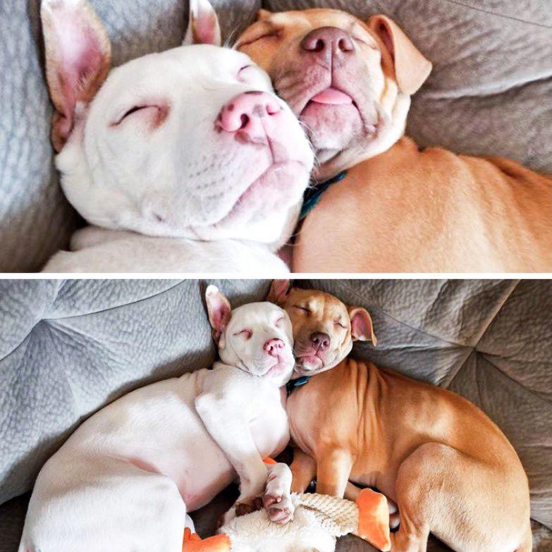 20+ фото, которые приблизят вас к решению завести собаку прямо сейчас