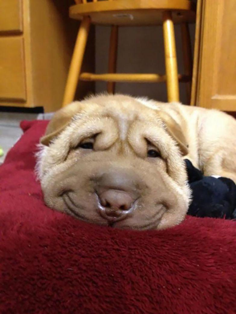 56. животное, улыбка