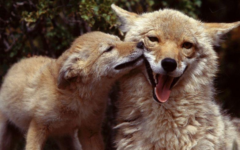 Любовь животных 21