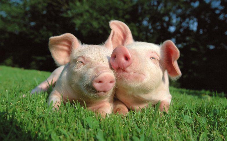 Любовь животных 29