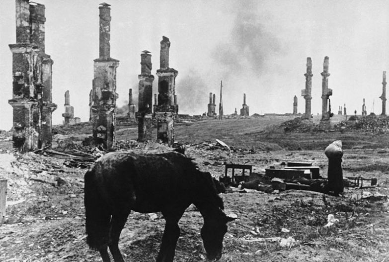 Лошадь среди руин, Сталинград, декабрь 1942 года