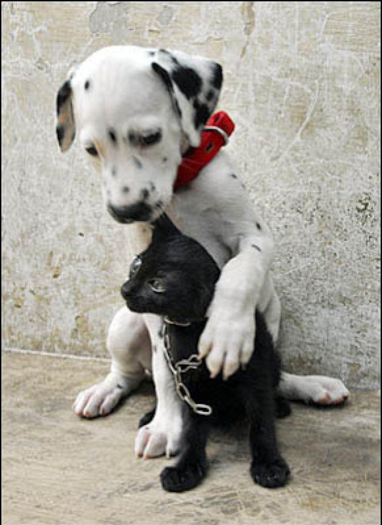 Любовь животных 24