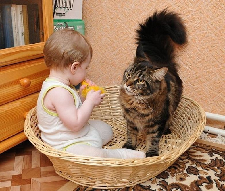 """21. """"Послушай, разве нам двоим тут хватит места?"""" кот, малыш, очарование"""
