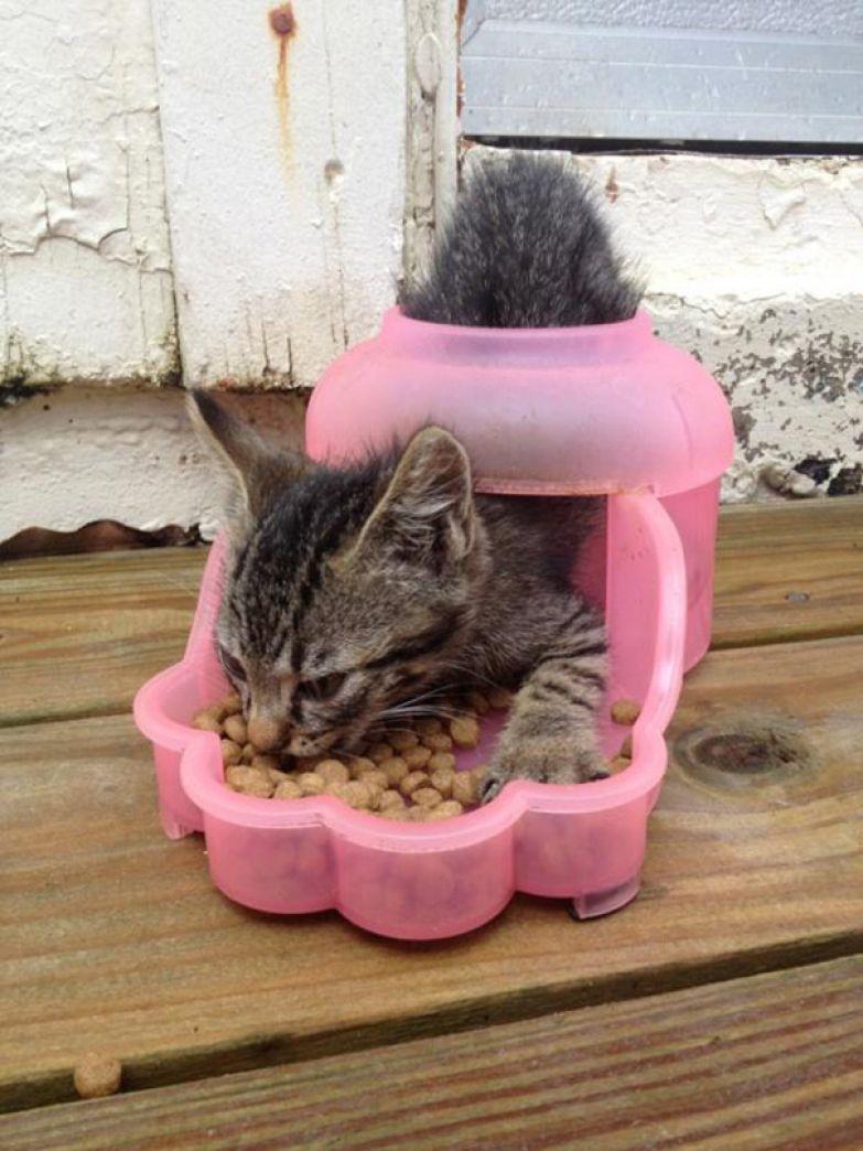 4. Кошачья логика.