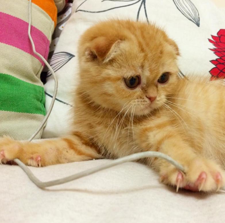 13. Когда забыл убрать зарядное устройство или наушники жизнь, кошка, ситуация