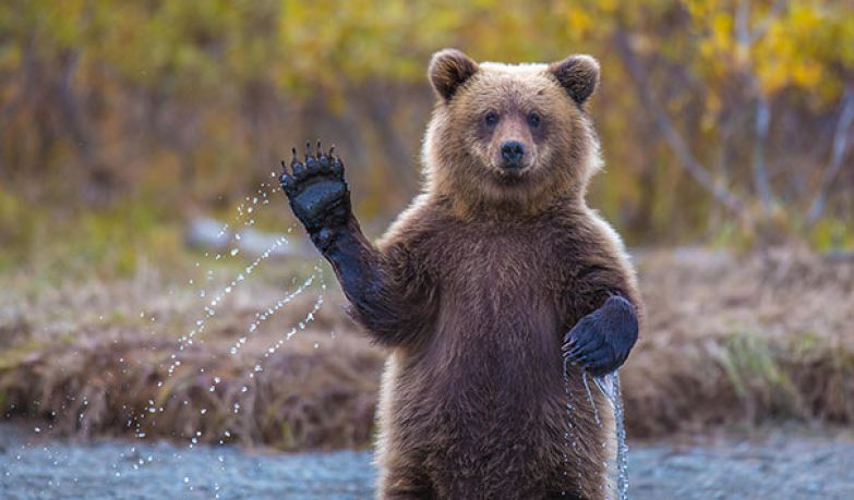 Медведи 3