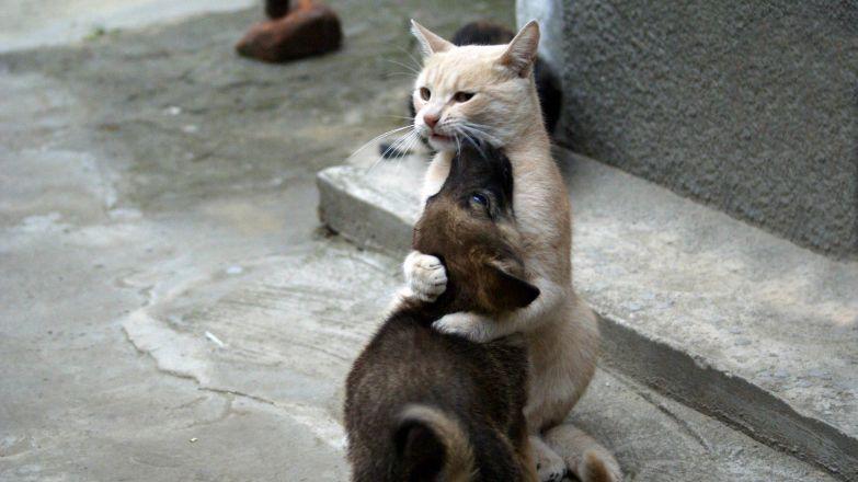 Любовь животных 10