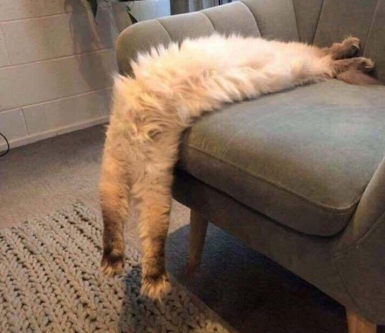 20+ случаев, когда у котов слетели настройки