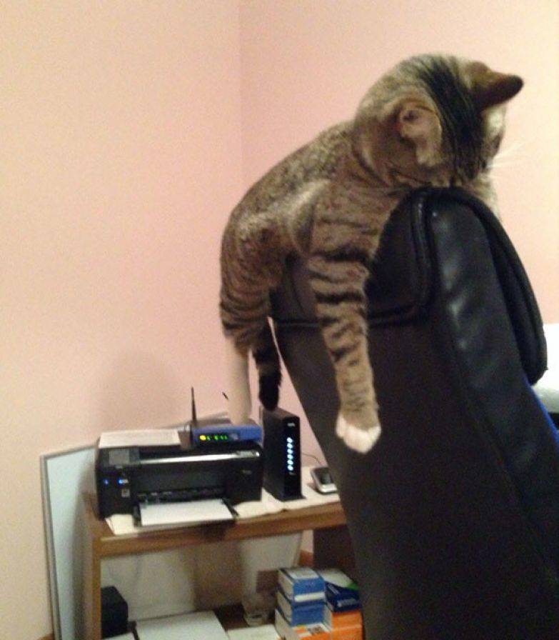 37. Какое удобное кресло животные, кошка, сон