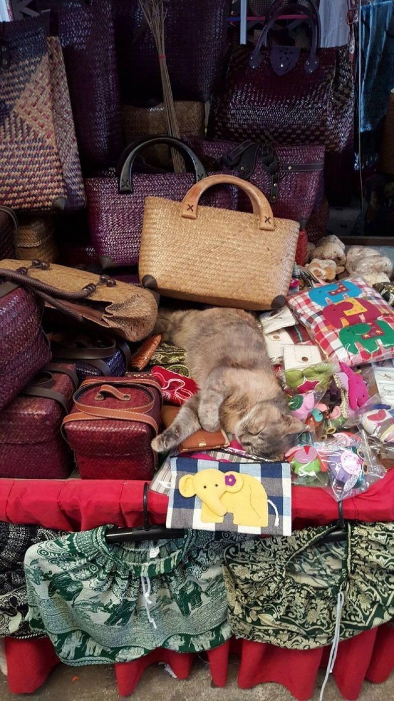 20. Кот без зазрения совести усядется на товарах животные, коты