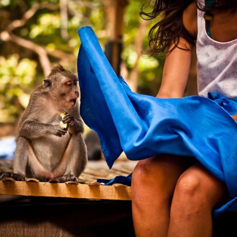любпытная обезьяна