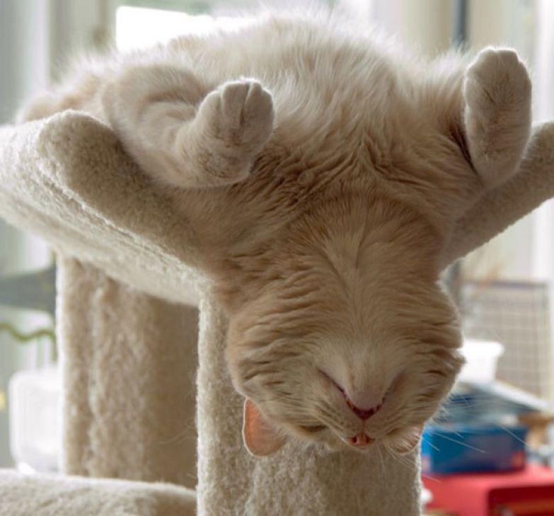 11. А кто-то спит так животные, кошка, сон