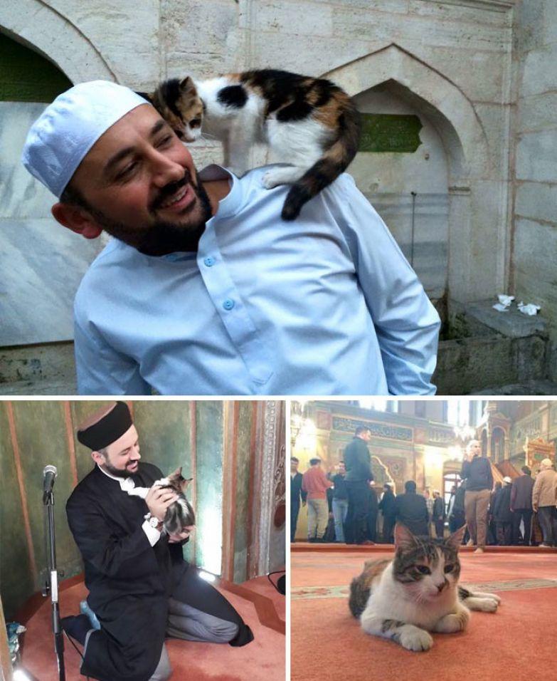 13. Имам пустил бездомных кошек погреться в мечети доброта, мир, поступок
