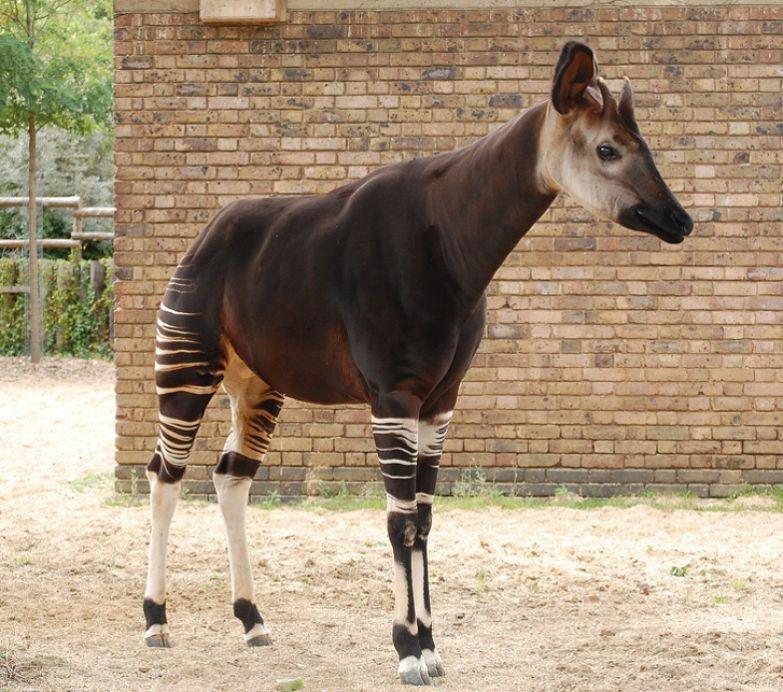 16 фактов о животных, о которых даже не все зоологи знают