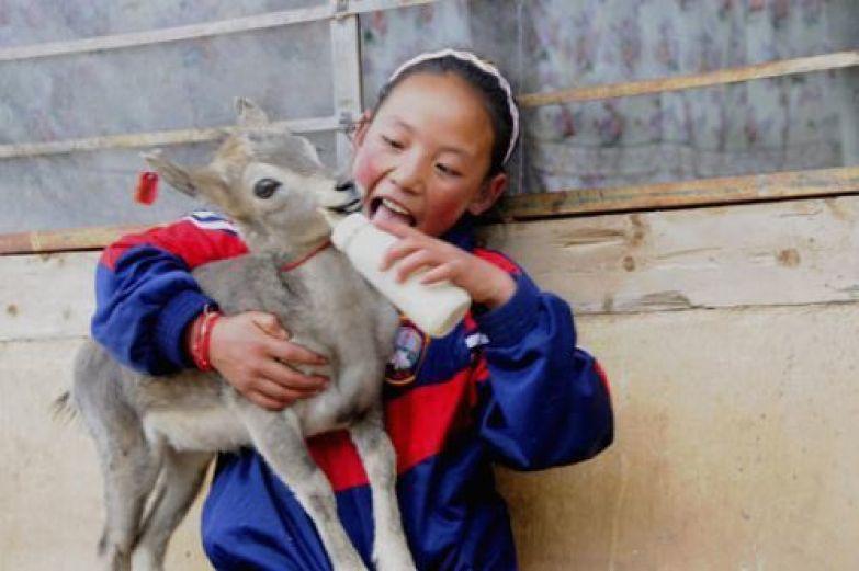 Тибетская девочка и олененок