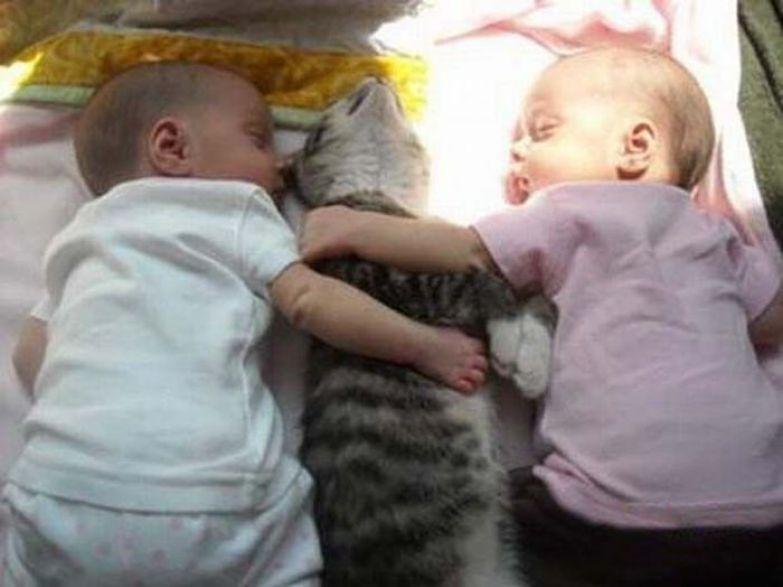 В это нелегкое время, домашние животные могут сильно выручить дети, мама, папа, прикол, юмор
