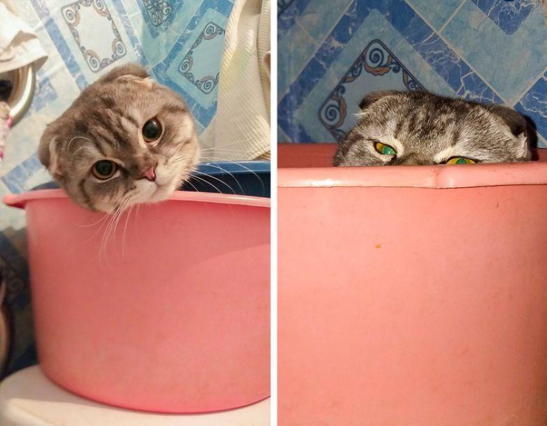 20+ беспардонных котов, которые каждый день проверяют на прочность нервы своих хозяев