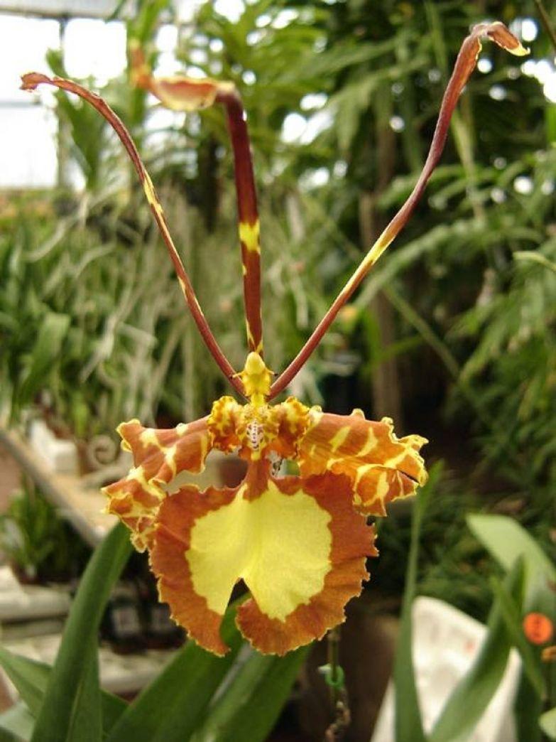 Орхидея 8