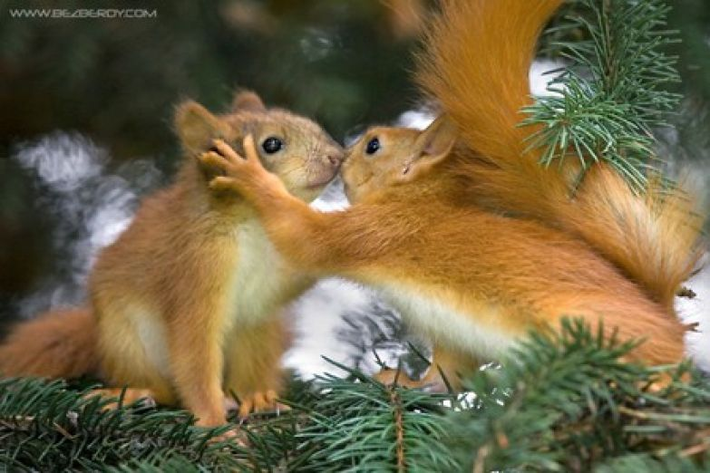 Любовь животных 25