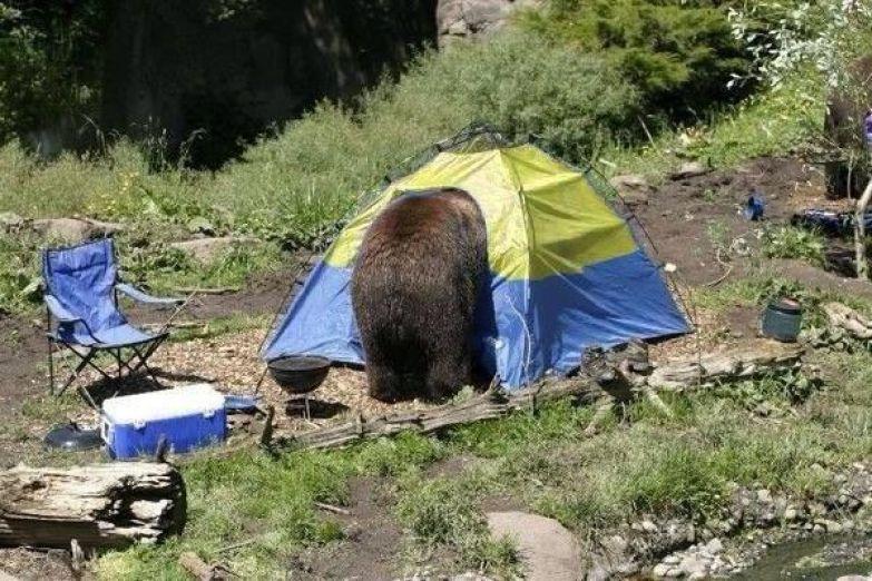 Для палаточного городка нужно выбирать безопасные места поход, прикол, туризм, юмор