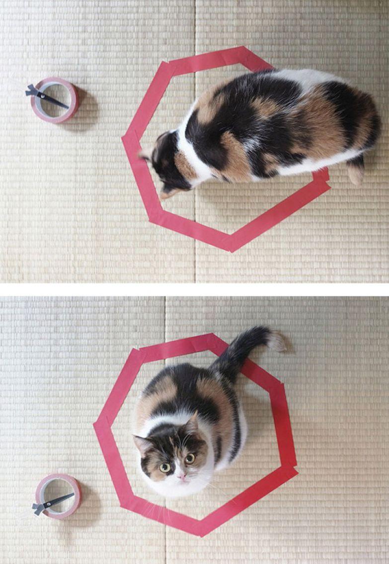 20. Ловушка для кота.