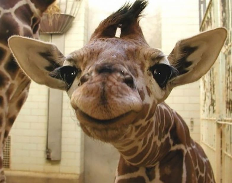 44. животное, улыбка