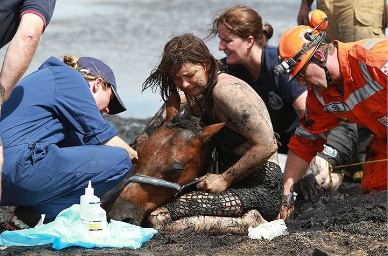 https://www.theguardian.com/world/gallery/2012/feb/28/horse-freed-mud-in-pictures