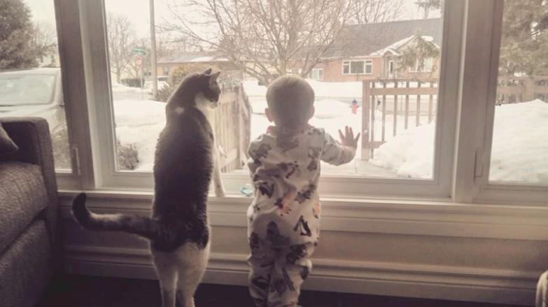 1. Такое очаровательное соседство кот, малыш, очарование