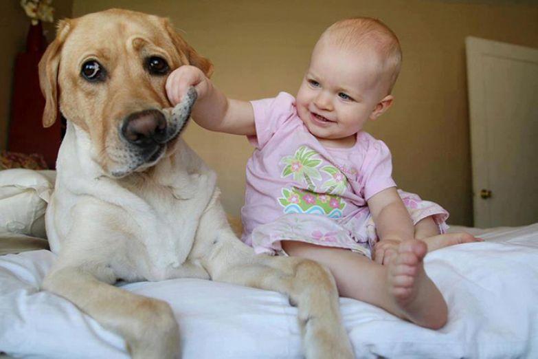 Крупные собаки и дети 12