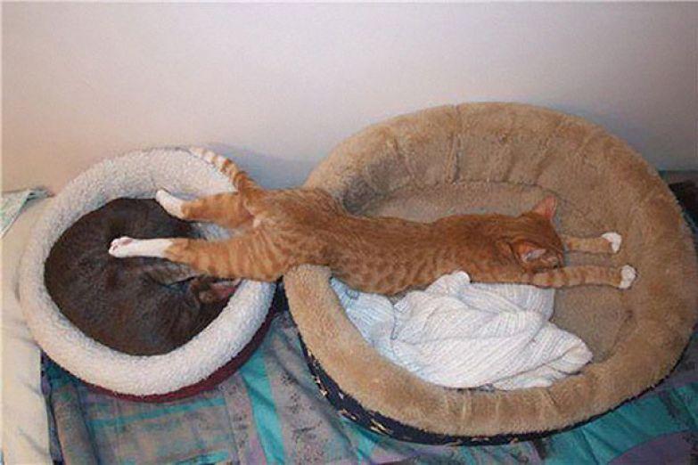 38. Ж - жадность животные, кошка, сон
