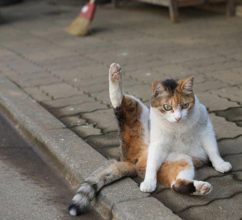 Японский фотограф снимает многоликих бездомных котов на улицах Токио кот, мило, милота, длиннопост
