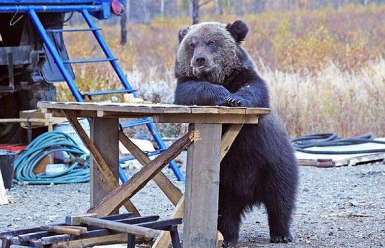 Медведи 17