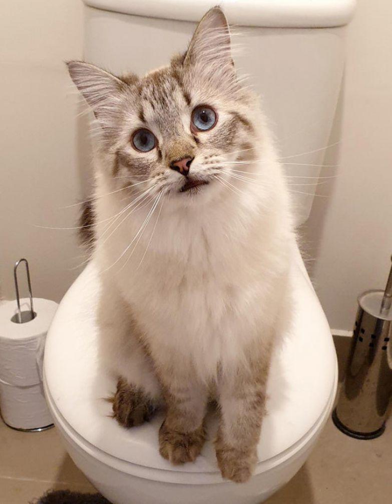 20+ избалованных котов, которые сели хозяевам на шею и лапки свесили