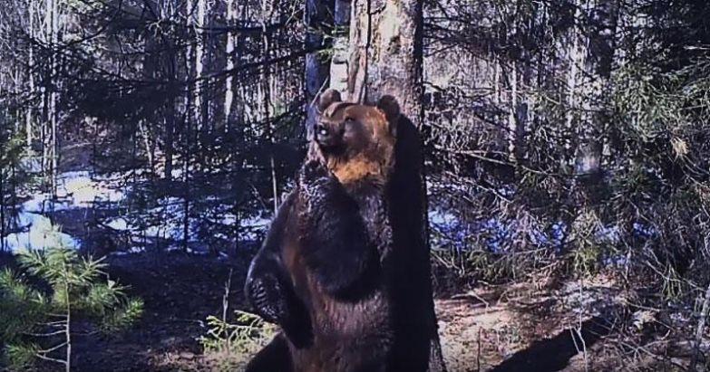 Вот чем на самом деле занимаются животные в лесу! Этот медведь — настоящий ...