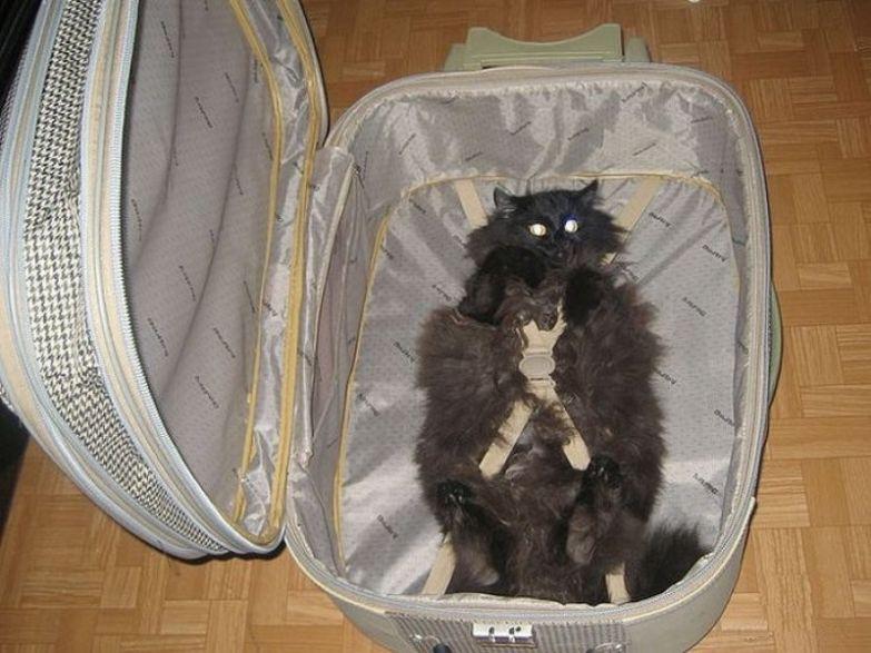 Путешествие в багажном отделении — суровое наказание. дети, коты, наказания, прикол, юмор