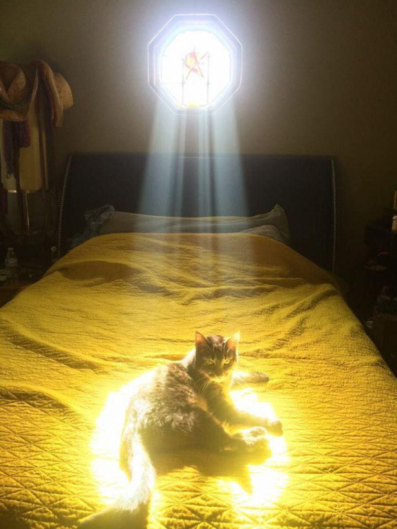18. Божественный свет? Он для того чтобы сидеть в нем животные, коты