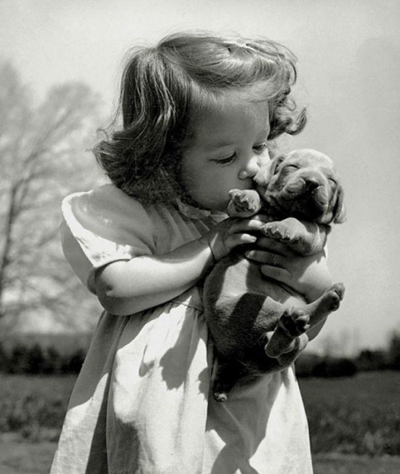 17. Девочка целует щенка веймарской легавой в питомнике своего отца-заводчика, 1950 г. архивные фотографии, лучшие фото, ретрофото, черно-белые снимки