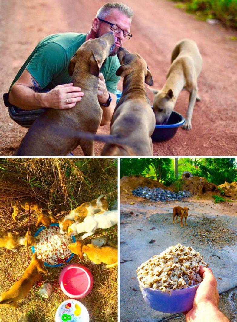 43. Мужчина ежедневно кормит 80 бездомных собак в Таиланде доброта, мир, поступок