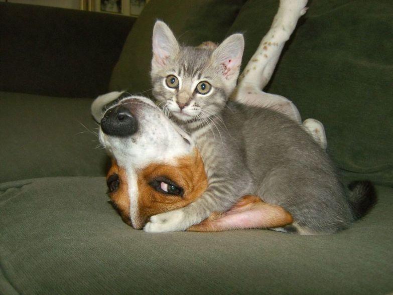 Любовь животных 11